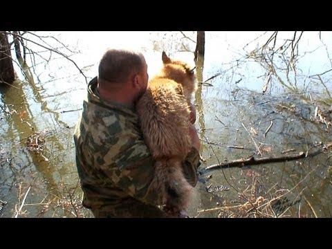 Охота на селезня и обучение щенка