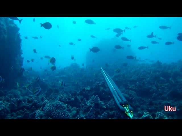 Spearfishing Hawaii (Lanai)