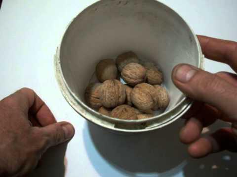 Как приготовить грецкие орехи - видео