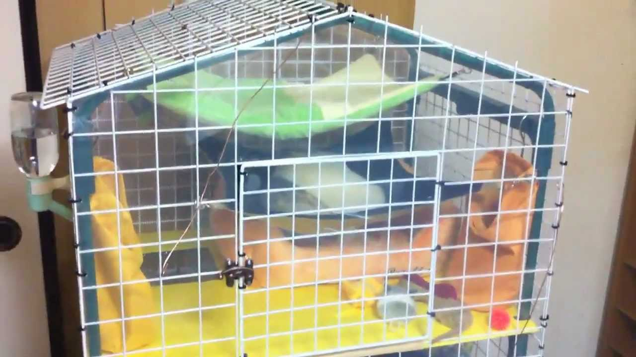 Home Made Ferret Cage Made From A Garden Shelf Youtube
