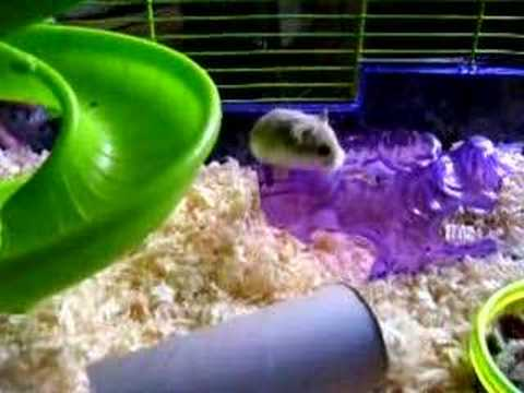 New hamsters in new cage