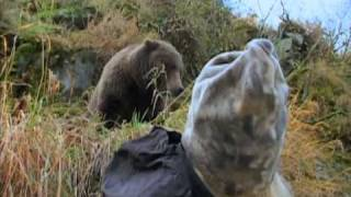 The 2 Bears - Curious Nature