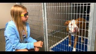 ЖИВОТНЫЕ ЗА РЕШЕТКОЙ Выброшенные собаки МОЙ РЕПОРТАЖ из приюта для животных в Orlando США ВЛОГ