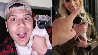 SURPRISING MY GIRLFRIEND WITH A PUPPY!!
