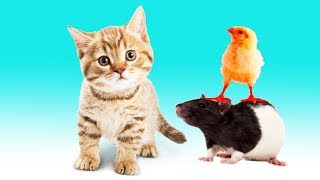 Animals for kids - The best animals learn names and sounds for Kids, Part 1 5 done