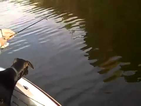 Bass Fishing Saguaro Lake Arizona 01-07-2010