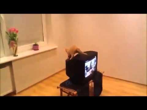 Неудачный прыжок кошака Юмор! Прикол! Смех
