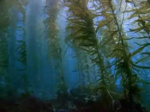 Buckethead - Baptism Of Solitude