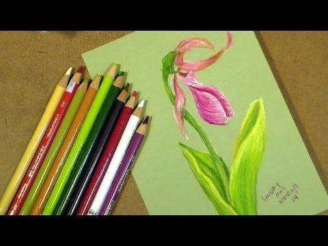 lady slipper in colored pencil tutorial
