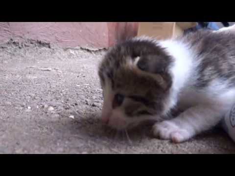 Pui De Pisica video