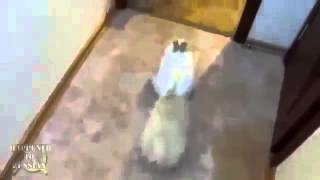 FUNNY ANIMALS COMPILATION 2013   EPIC VIDEOS!   YouTube