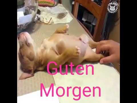 ➤ lustiges Video | Tiere die morgens nicht aufstehen wollen