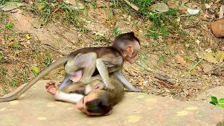 NICE AND FUNNY VIDEO OF BABY MONKEYS SCARING KING MONKEY & DOING FUNNY ACT