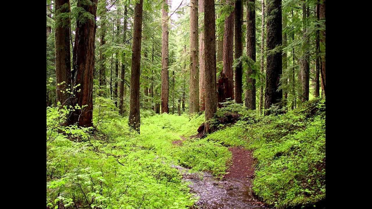 Фотка в лесу 16 фотография