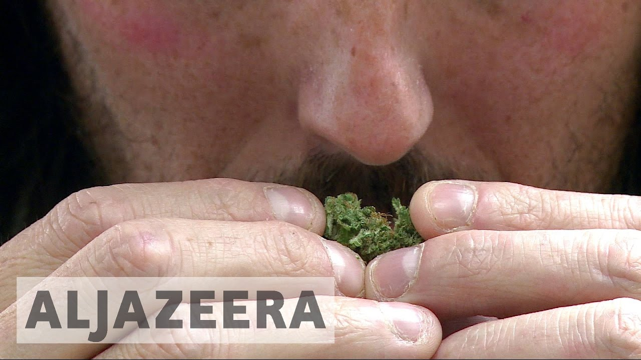 Canada looks to legalise recreational use of marijuana