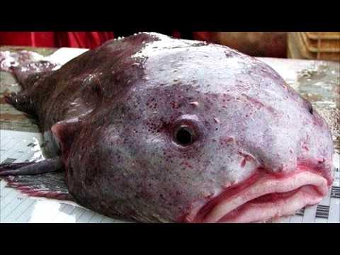 10 Удивительных существ, обитающих в глубинах океана