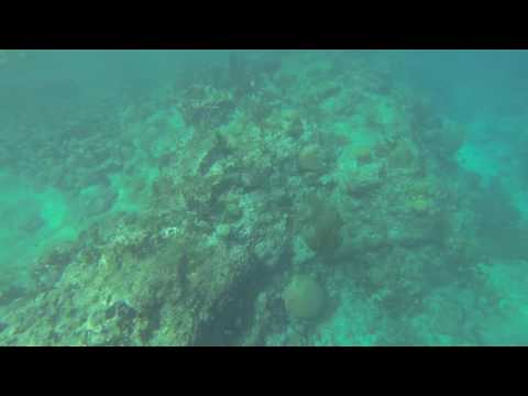 Snorkeling Caracas Baai / Director's Bay, Curaçao 2015