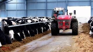 download lagu Feeding The Cows -  Putting Back The  gratis