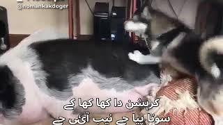 اٹھ پاکستانی پارٹی کے شیر۔Madlipz.funny  and comedy urdu video clip.