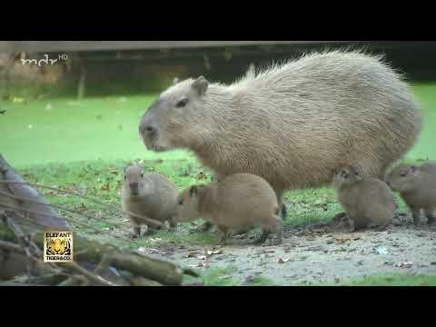 Sieben Kinder bei den Wasserschweinen