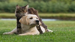 Top 5 Cat and Dog friendly fight | Cat and Dog Funny Fight Compilation