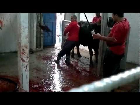 25 Ekim 2012 - Bursa Alaattinbey Kurban Pazarı - Celiller Ailesi Kurban Kesimi