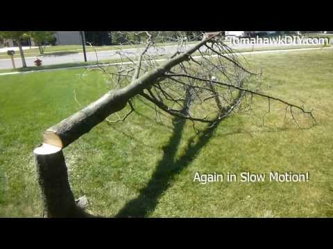 Cut Down A Tree With A Chainsaw video