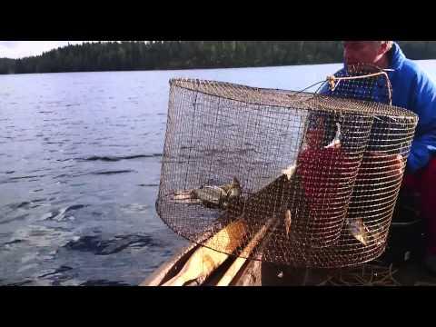 как ловить сеткой по течением видео