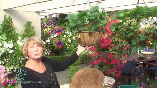 Hanging Baskets - Introduction