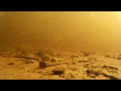 YUM Walleye Grub 4'' jig (Texas rig)