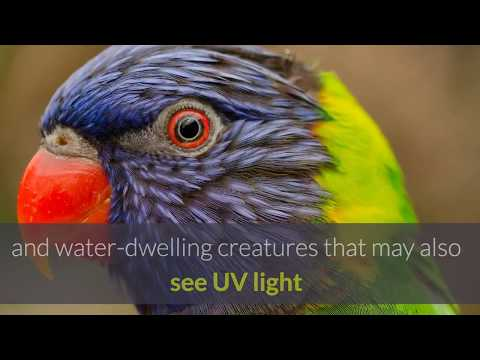 the secret of animals in technological advances 3 uv detection