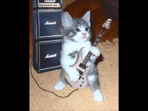 Guitar Cat Rocks to Breaking Benjamin