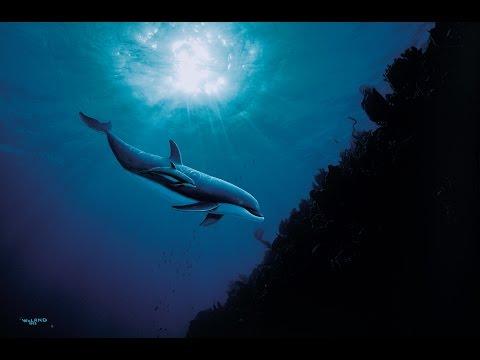 Art's Impact on Ocean Conservation - Oct. 30