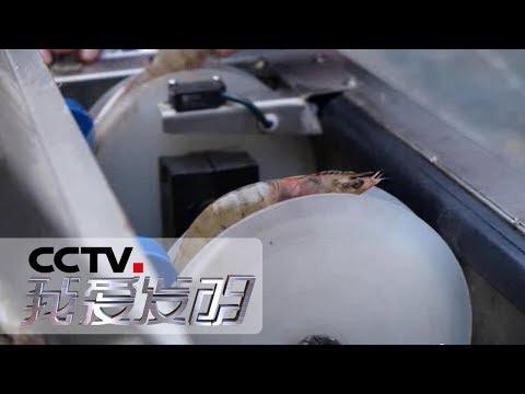 中國-我愛發明-20190712 讓蝦線飛
