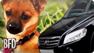 Dog vs. Cars: Carbon Footprints and Pet Ecological Terrors | BFD | TakePart TV