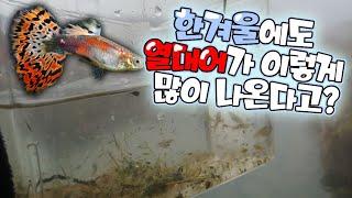한국에 실존하는 온천에서 나온 수백마리의 열대어들의 비밀은..?