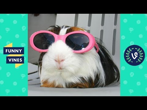 ULTIMATE Funny Animals Compilation 2017 - Best Animal Videos [30 MIN] | Funny Vine