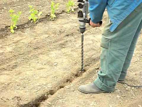 Quand planter des poireaux