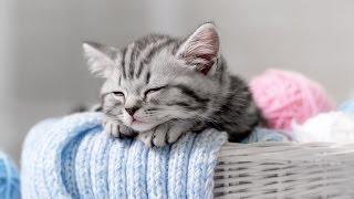 Download Lagu Sleep Music for Babies, Classical Sleeping Music, Baby Classical Music, Calm Music, Relax, ♫E086 Gratis STAFABAND