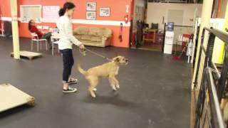 Training | Drop off session | Solid K9 Training Dog Training