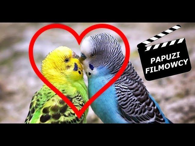 Styczniowe papugi kochają, śpiewają i gadają