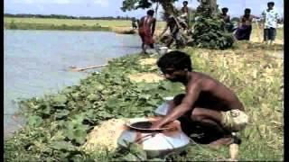 পোনা সংগ্রহ পরিবহন এবং লালনপালন-Bangladesh Open University -Shaik Siraj-1