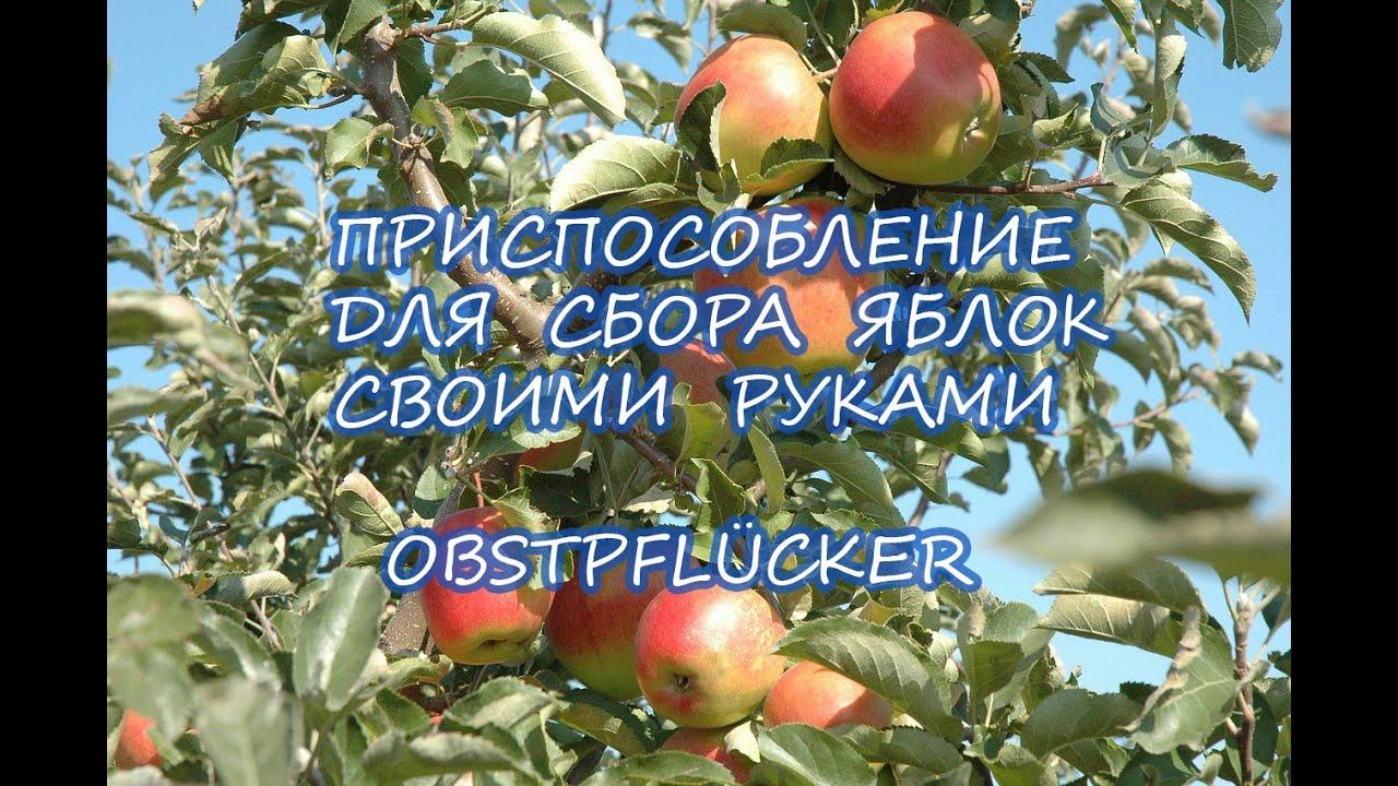 Для снятия яблок своими руками 323