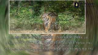 Sundarboner Prani