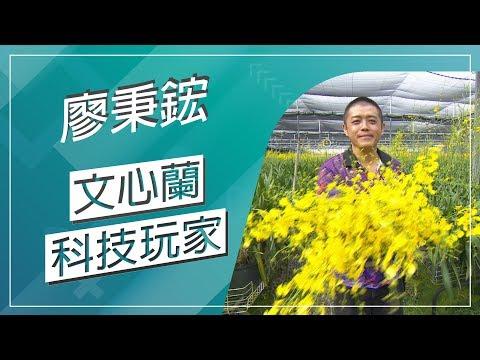 台灣-草地狀元-20181105 2/2 文心蘭科技玩家