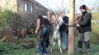 ... at work: 2 horses, shetland pony, donkey, big horse and a shire 03:59