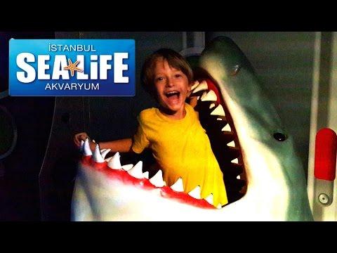 Акула, рыбы, под водой. Развлекательный комплекс Аквариум Sea Life