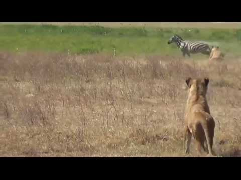 Quality of Employees - Teamwork at the African Savannah