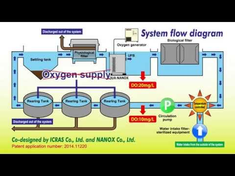 A closed recirculating aquaculture system (CRAS) using oxygenated ultra fine bubbles