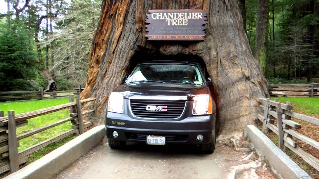 Car Driving Through Tree Trunk